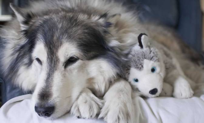 Animals With Their Stuffed Counterparts