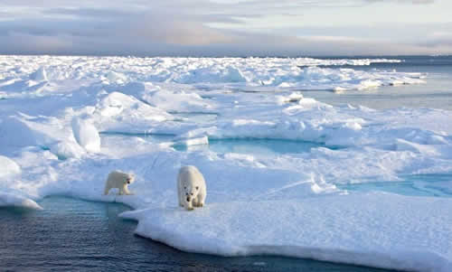 The Quest For Sea Ice – A GoPro Video About Polar Bears
