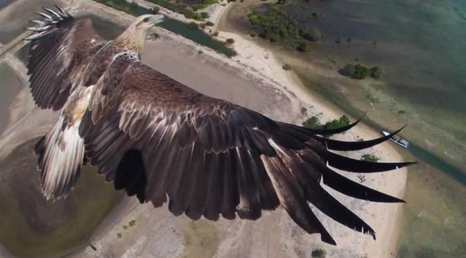 International Drone Photography Awards
